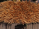 A Huge Bundle of Carrots Fills a Sidewalk Stall