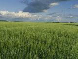 Wide Open Spaces of the Saskatchewan Plains North of Balcarres