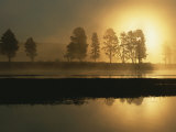 Silhouetted Trees Along the Yellowstone River at Sunrise