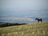 A Wild Horse Stands on a Hill Overlooking a Huge Western Landscape