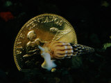 Philippine Gold Coin with Turret Shell