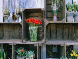 Tulips in Vases Atop Makeshift Wooden Crates