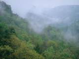 Fog Drifts Across a Cove in Tennessee