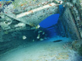 Fish Swimming in Shipwreck  Tortola Island  Virgin Islands