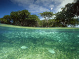 Aquatic Split-Level View with Fish and Mangroves  Australia
