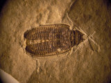 Fossil Beetle Found at Sihetun  China