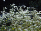 A View of Daisies Blurred in Movement