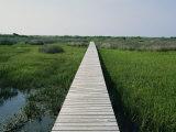 Walkway Above Wetlands