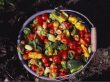 A Pail Full of Colorful Peppers