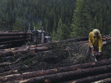Logging Near Salmon  Idaho