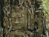 Temple Ruins Covered with Tree Roots