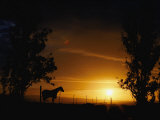 Horse Silhouetted against Sunset Sky