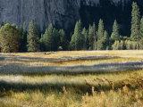 El Capitan Meadow in the Valley of Yosemite National Park
