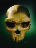 The Skull of an Prehistoric Man