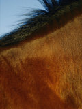 A Horses Neck and Mane