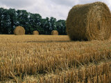Haystacks in a Field in Normandy