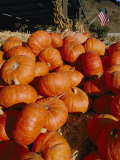 Close View of a Pile of Picked Pumpkins