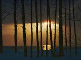 Setting Sun Seen Through a Grove of Trees