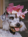 Dog Sporting a Flowered Hat