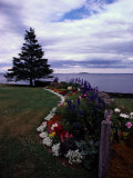 Flower Bed and Tree Overlooking the Water