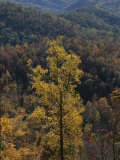 Autumn Colors Paint a Beautiful Fall Forest Landscape