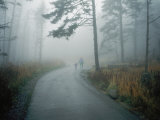 A Woman Leads Her Toddler Down a Paved Trail in the Fog