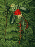 Tropical Seeds and Flowers from the Cloud Forest Which are Eaten by Resplendent Quetzal Birds