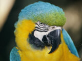 A Close-up of the Head of a Macaw