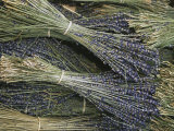 Sprigs of Lavender  Provence Region  France