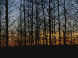 Sunset Blazes Behind Silhouetted Denuded Trees