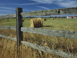 Rolls of Hay Fill a Farmers Field