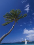 A Scenic View of a Palm Tree and a Sailboat off the Coast of Peter Island
