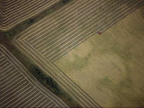Aerial View of a Harvester Gathering Barley
