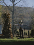 A Scarecrow Stands Guard Next to a Corn Shock