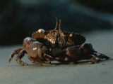 A Close View of a Crab