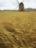 A Windmill Stands in a Field of Grain
