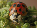 Close View of a Ladybug