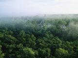 A View of the Mayan Ruins at Tikal