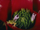 Tiny Frog Inside a Bromeliad