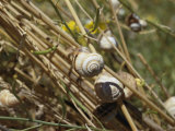 Snails Cling to Plant Stems