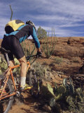 Rider Cycling Through Cacti  Arizona