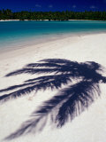 The Shadow a Palm Leaf on the White Sand of One of Aitutaki Lagoon's Many Islands  Cook Islands