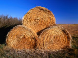 Three Hay Bales on Farm in Red River Valley  Alberta  Canada