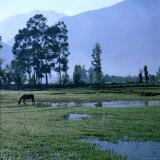 A Lone Horse Grazing in Rural Yucay  Yucay  Cuzco  Peru