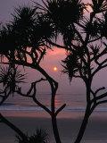 Palms and Beach at Sunrise  Bundjalung National Park  New South Wales  Australia
