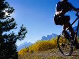 Mountain Biker in Autumn  Canmore  Canada