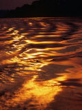 Sunlight Reflecting off the Dark Water of the Rio Negro  Amazonas  Brazil