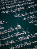 Rows of Yachts Moored at Westhaven Marina  Waitemata Harbour  Auckland  Auckland  New Zealand