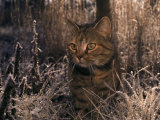 Close View of a Tabby Cat in a Frost-Covered Field This is the Photographers Cat