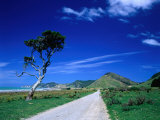 Gravel Road Linking Te Araroa to East Cape  Gisborne  New Zealand